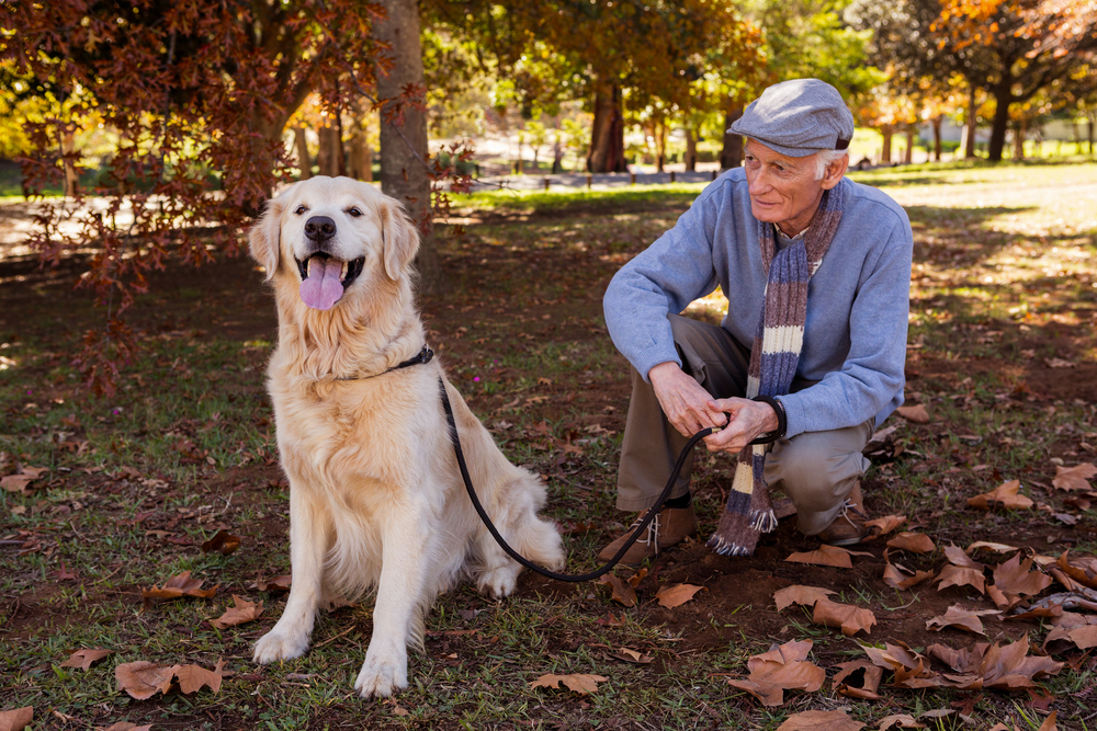 Amazing benefits of pet therapy in aged care