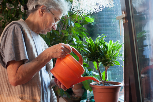 How indoor plants can improve wellbeing in aged care settings